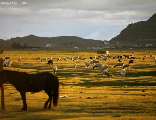 Монгол морь дэлхийн хоёрдугаар дайнд