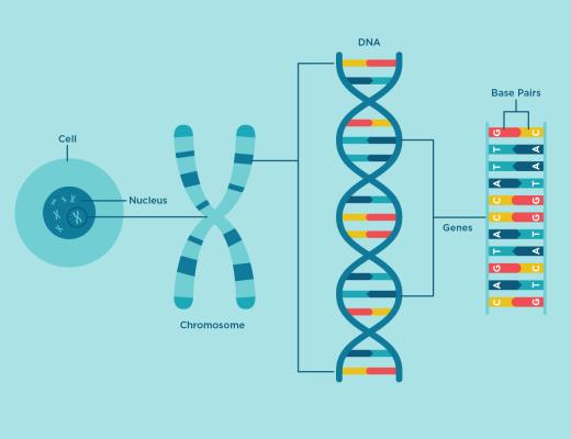 ДНХ-ийн тухай